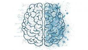 Dois hemisférios do cérebro